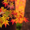 Photos: 高円寺にて