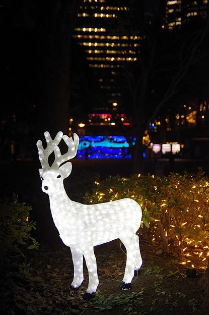 新宿中央公園にて