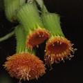 写真: 植物