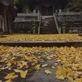 黄い絨毯。