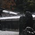 Photos: 国泰寺  月泉庭  雪化粧