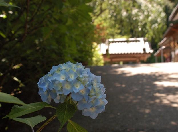 Photos: 本興寺