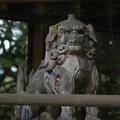 Photos: 出水神社  木製の狛犬