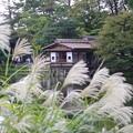 Photos: 秋の時雨亭