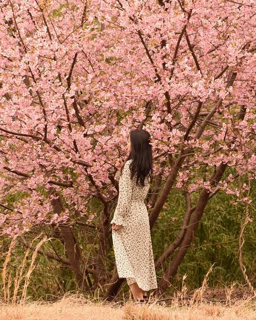 Photos: 妖精