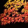 Photos: 彩り