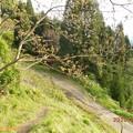Photos: yokoyama141