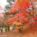 Photos: takadoya53