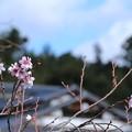 写真: 季節外れ