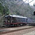 Photos: 黒松