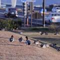 近江大橋近くの水鳥