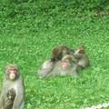 Photos: 神庭の滝のニホンザル