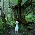 蓼科の杉2
