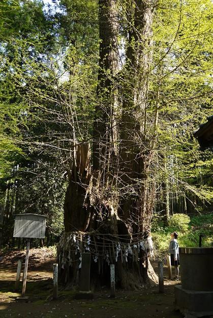千葉県市原市熊野神社大イチョウ
