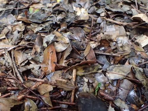 枝葉の破砕片(4ヶ月経過)