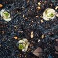 芽を出した小松菜(2021年1月)