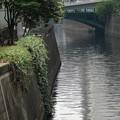 水道橋から見た 神田川
