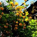 七重八重 花は咲けども・・