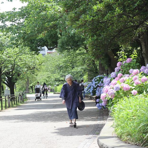 上野池之端紫陽花通り