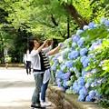 スマホで 紫陽花を撮る