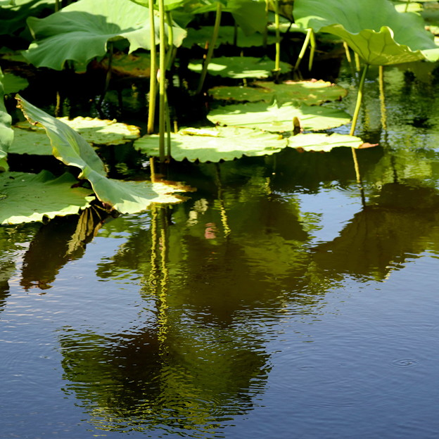 上野忍の池