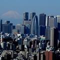 写真: 都庁の裏には富士山が