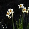 Photos: 春の香