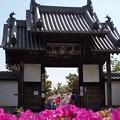 写真: 法雲禅寺山門
