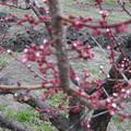 公園の木花