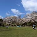 桜の咲く広場