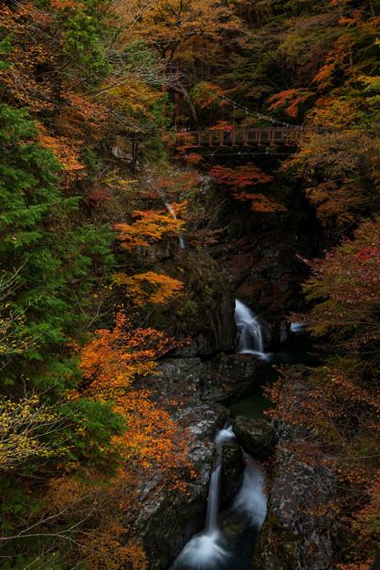 Photos: みたらい渓谷