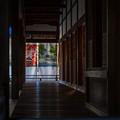 Photos: 仁和寺