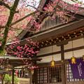 Photos: 枚岡神社