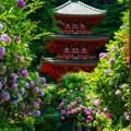 Photos: 岩船寺