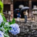 Photos: 梅雨
