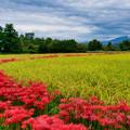 Photos: 秋へ