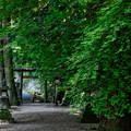 Photos: 丹生川上神社