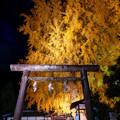 Photos: 丹生酒殿神社