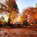 Photos: オレンジ色に