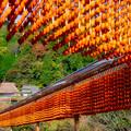Photos: 串柿の里