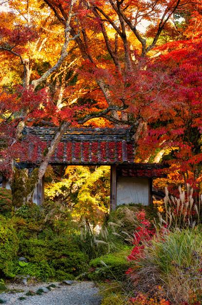 Photos: 大願寺