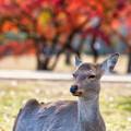 Photos: くつろぐ