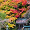 Photos: 観心寺