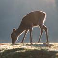 Photos: 鹿さん