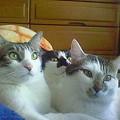 三兄弟モフ毛布