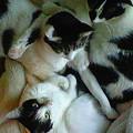 4匹猫集め