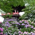 写真: 花盛り