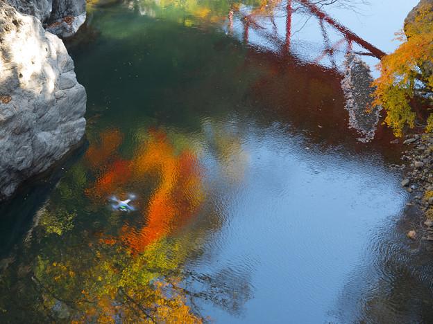 桂川の紅葉