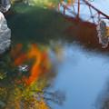 写真: 桂川の紅葉