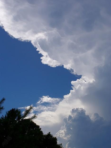 Photos: 西の空に湧く